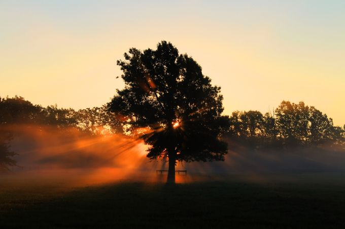 Tree in the morning sunrise by DreamscapeCanada - Tree Silhouettes Photo Contest