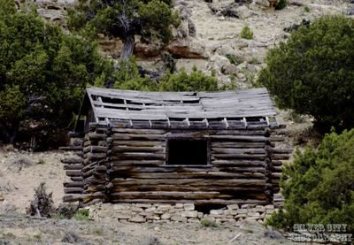 cabin in the juniper