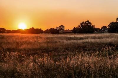 Golden Sunset in Springs SA