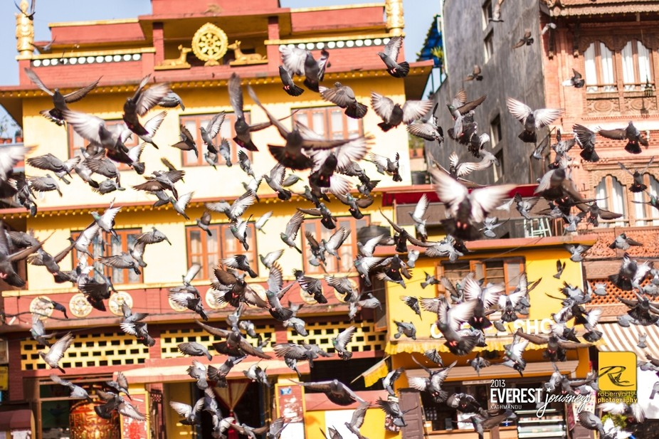 The fluttering of pigeon wings is a constant view in a small corner right next to the Bodnath. Th...