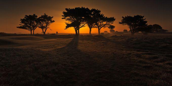 Irish Savannah by marekbiegalski - Silhouettes Of Trees Photo Contest