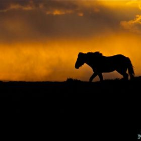 Wild stallion walking on ridge at sunset storm approaching