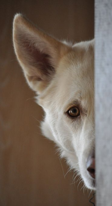 peek a boo by timothy_a_chadwick - Hiding Photo Contest