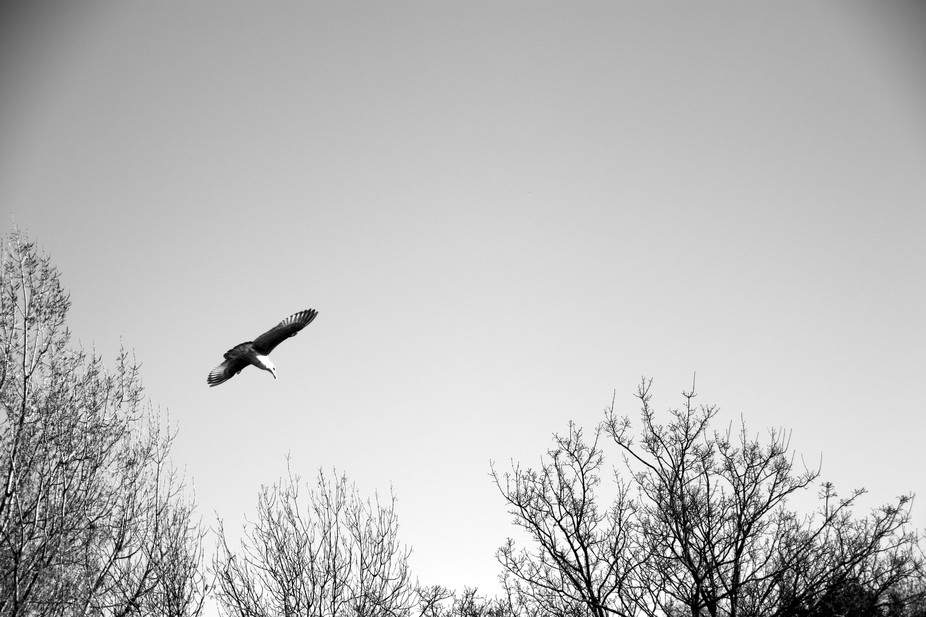 A bird flying high in St James Park London