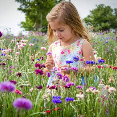 Picking Wildflowers