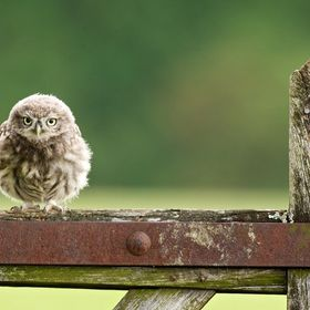 a wild little owlet waiting for his mother to feed him...
