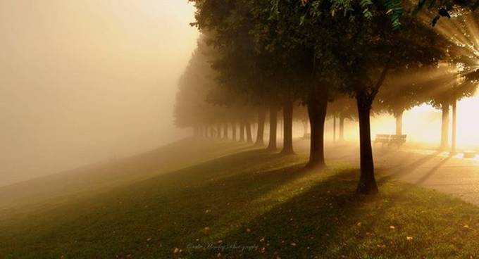 Shining Through The Fog by Ladybroken73 - Best Shot Photo Contest