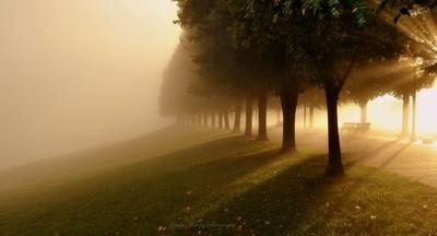 Shining Through The Fog