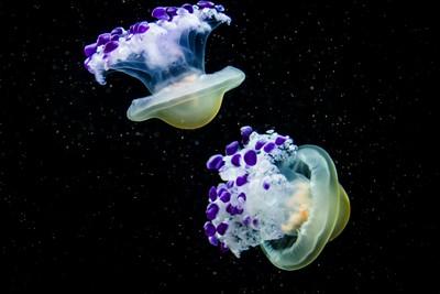 Purple Spaceships