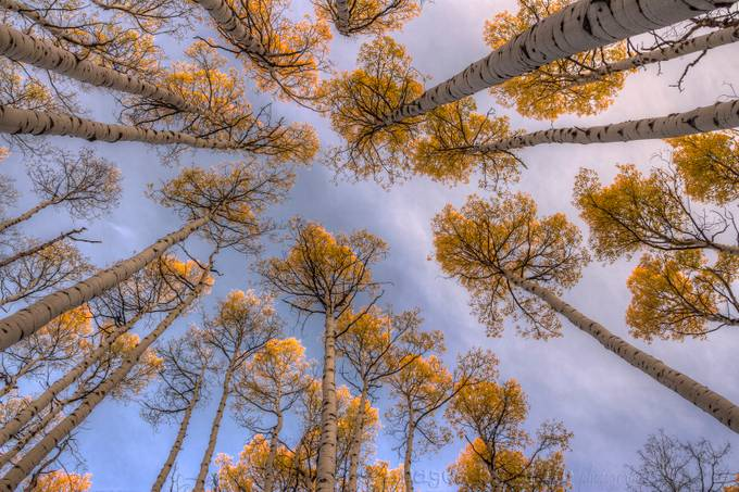 Looking Up Treetops by blairwacha - Composing with Diagonals Photo Contest