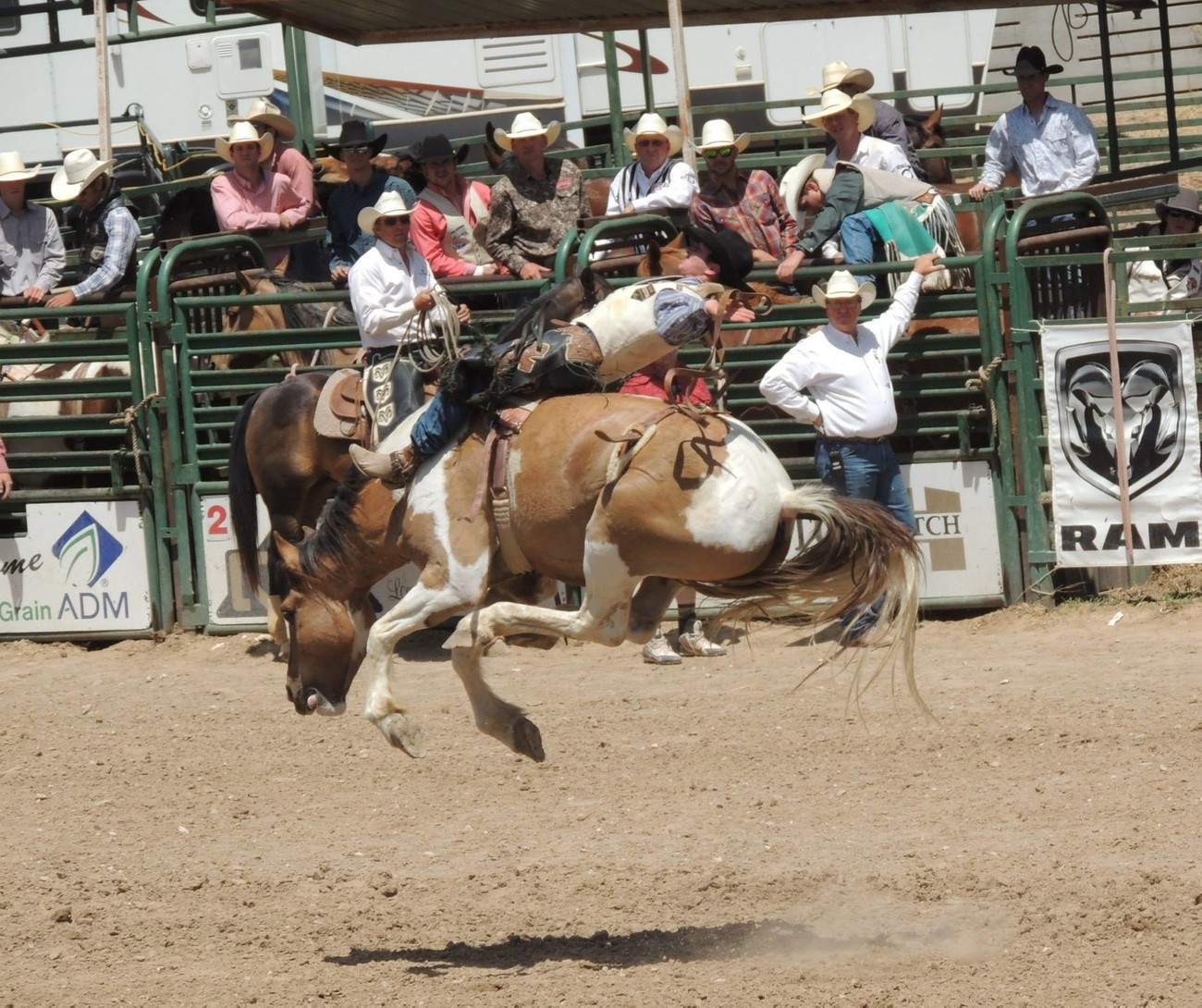Awesome shot of a bronc rider in action!