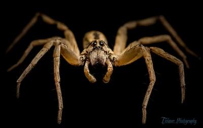 Grandpa Spider