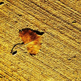 leaf on the pathway of a local park
