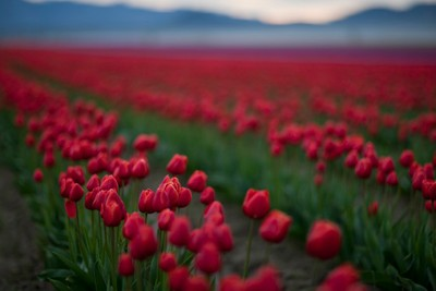 Red Color In Nature Photo Contest Winners