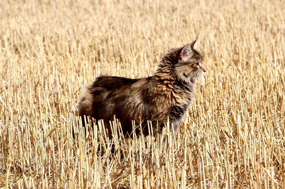 Suzi in stubble field
