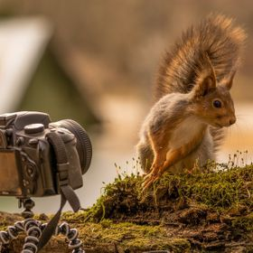 Squirrel posing for camera