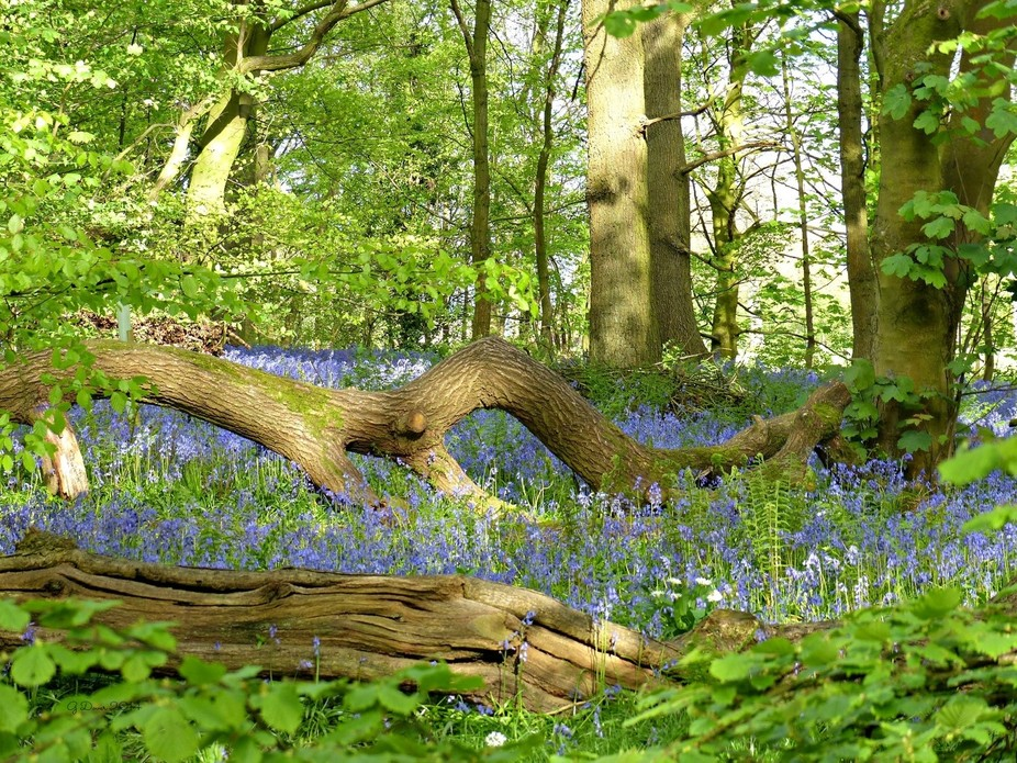 Spring Wood, Whalley