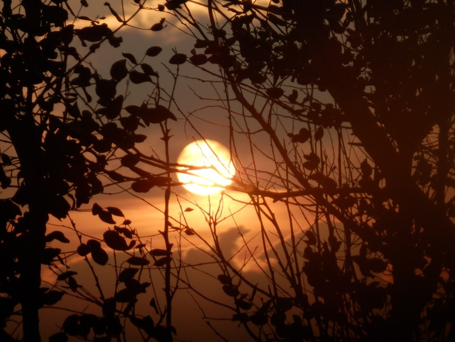 Sunset through the branches, Port Erin.