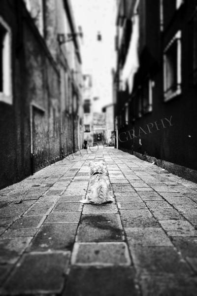 Lost dog- Venice