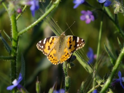 Butterfly Sunbath