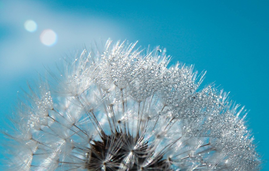 What time is it on the Dandelion Clock