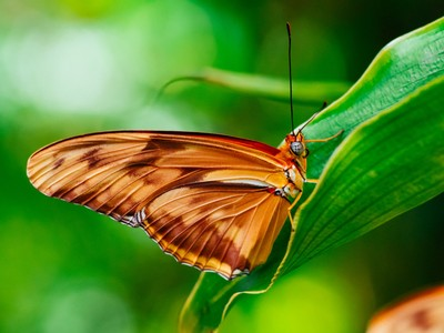 Funnel Leaf
