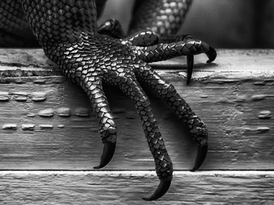 The Claw in Black and White