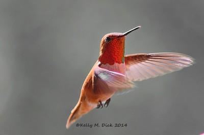 ~Beauty in Flight~