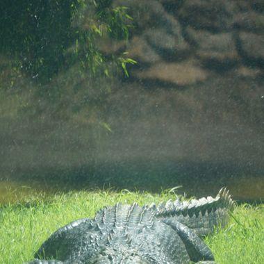 Big croc 2