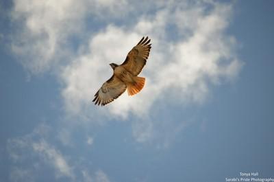 Flying Overhead