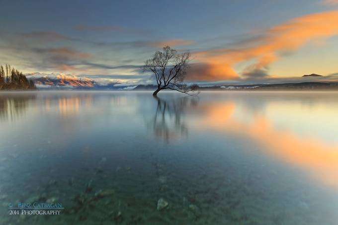 L O N E  |  T R E E by benzcatbagan - A Lonely Tree Photo Contest