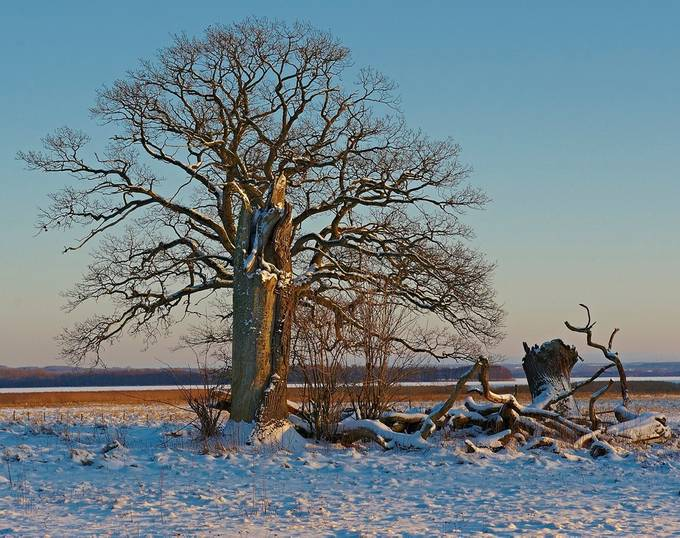 The Tree.....Wintertime by Galskjaer - A Lonely Tree Photo Contest
