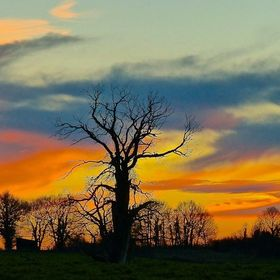 I was driving down a narrow country lane when I spotted this tree against the wonderful sunset. I had to climb up a steep bank in order to get th...