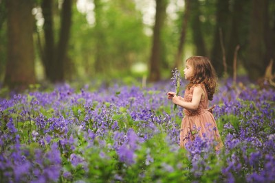 Bluebell Princess
