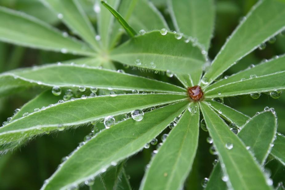 Water Drops 064