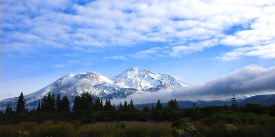 Mt Shasta in morning light  32 x 16