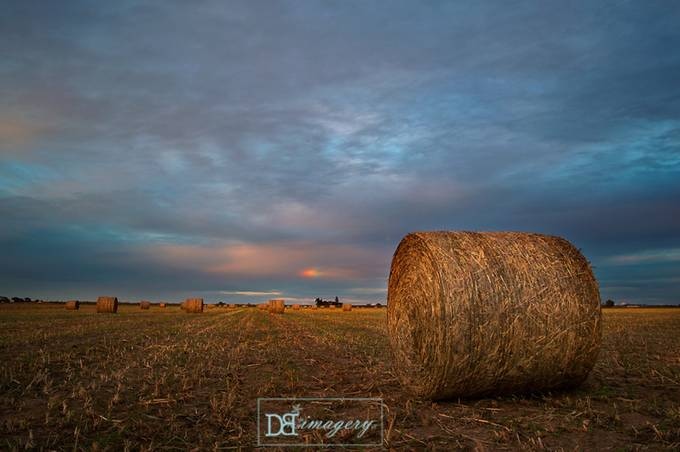 A Glimpse of Luck by DonnaBaileyPhotography - Dry Fields Photo Contest