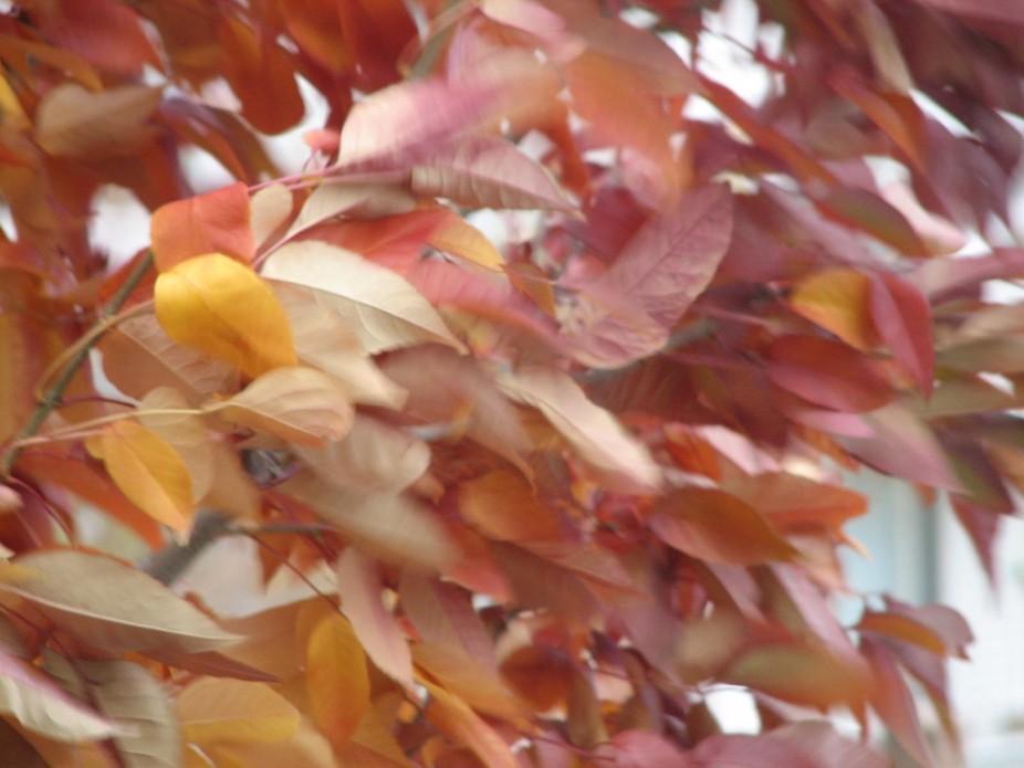 Fall Winds