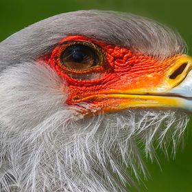 This Secretary bird was right in front of me, just 2 meters away, so I could make a nice close-up...