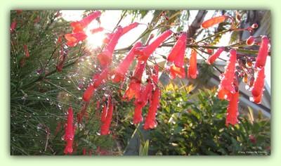 Good Morning Dew Drops