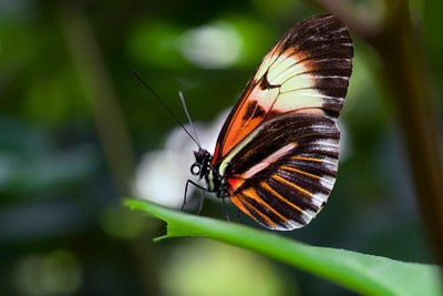 Poised Butterfly