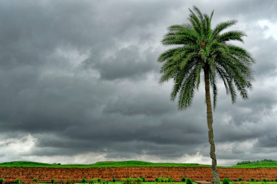 A palm tree is standing all alone spreading the beauty with dark sky. The moment is just before a...