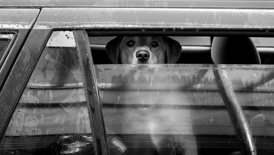 A dog waits in the car on a rainy day.