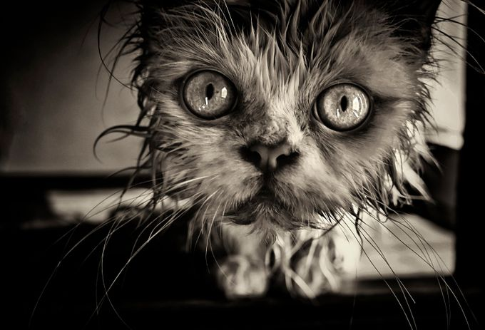 Wet kitty by dusica - Cute Kittens Photo Contest