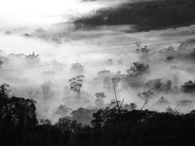 Morning Mists Australia by ShadowmacPhotography - A Black And White World Photo Contest