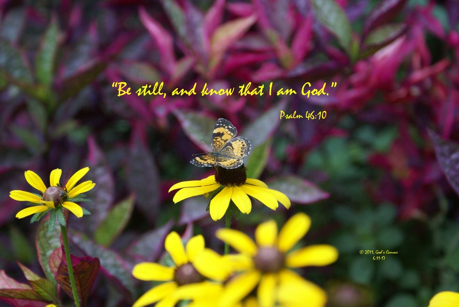 Butterfly Psalm 46-10