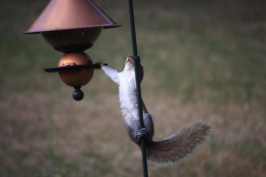 Silly Squirrel3