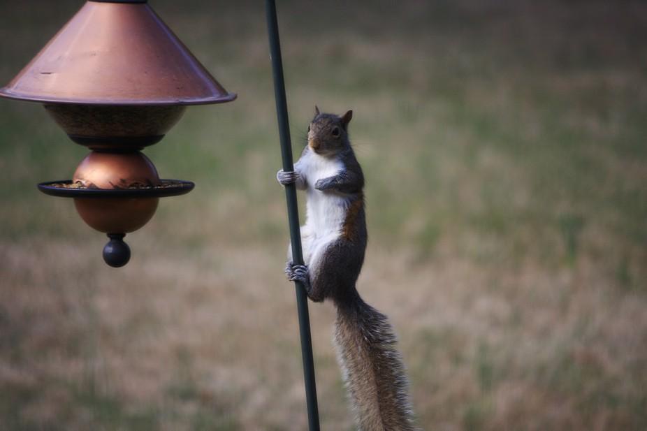 Silly Squirrel 1