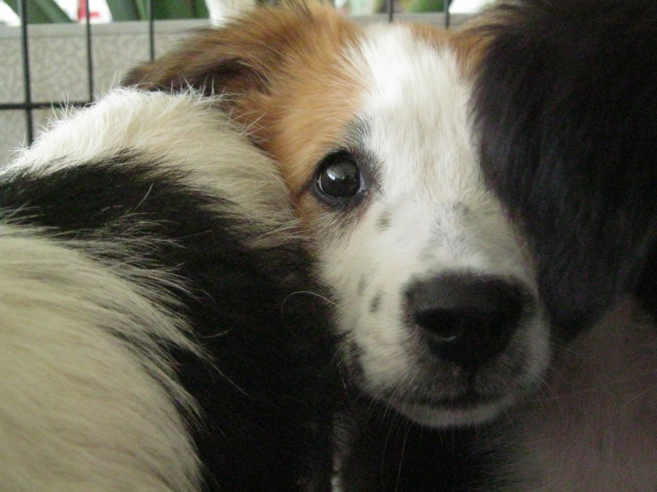 Puppies left @ the Municipal Shelter innocently await a favorable outcome.