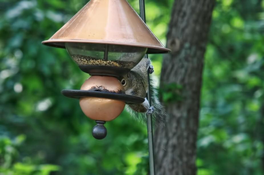 silly squirrel 4